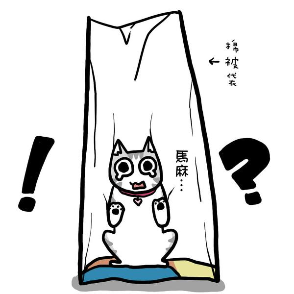 街頭巷尾貓2-2.jpg