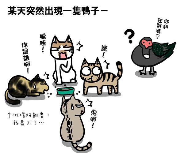 街頭巷尾貓1-1.jpg