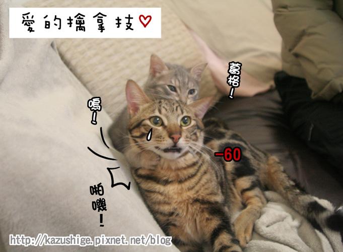 貓奴14-6.jpg