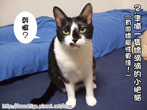 貓咪三明治2.jpg