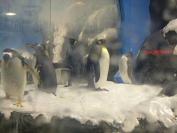 國立海洋生物博物館企鵝館