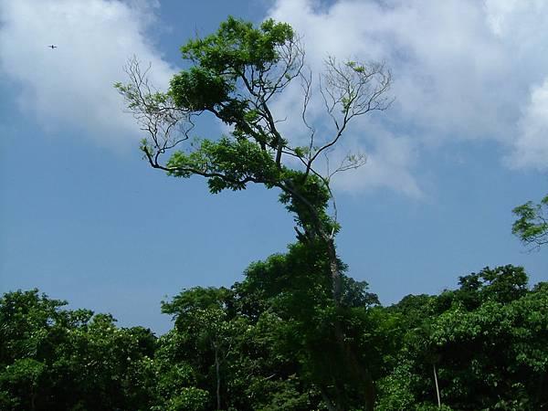 墾丁國家森林遊樂區一景