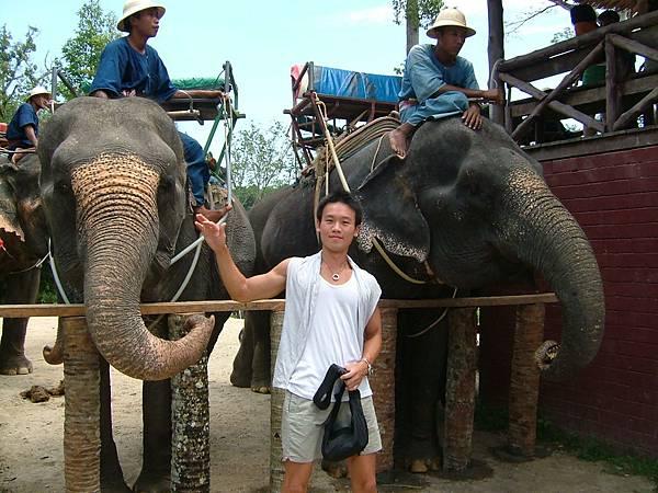 餵大象香蕉和甘蔗