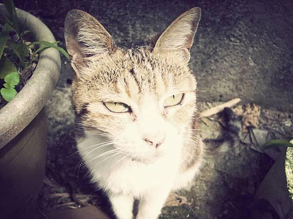 在侯硐拍的屌貓