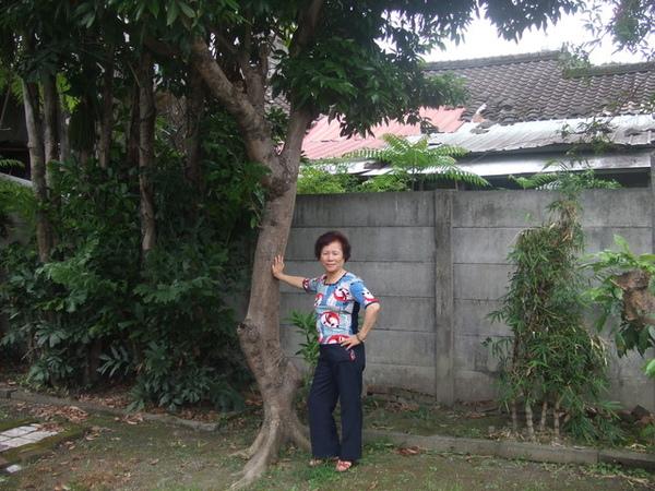 老娘與老家的荔枝樹