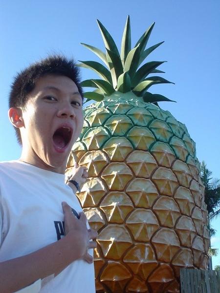 好大的鳳梨