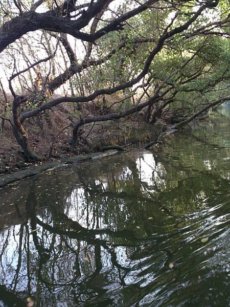 樹與倒影相映