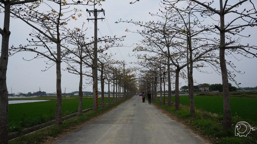 木棉花苞鐵馬道
