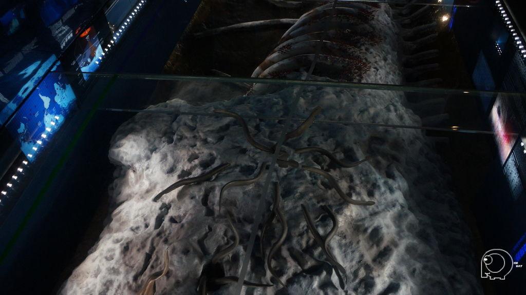 深海展示廰