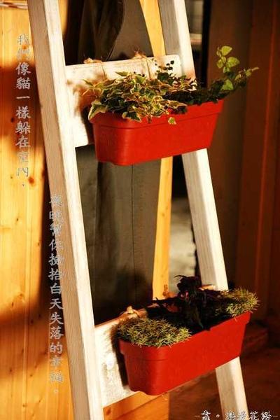 梯子與小草.jpg