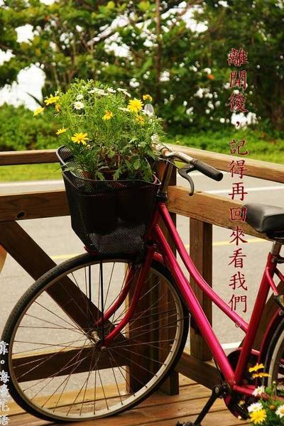 單車與花.jpg