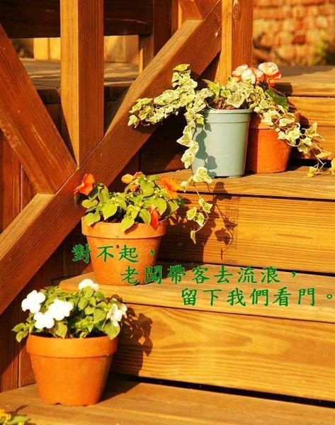 階梯小花.jpg