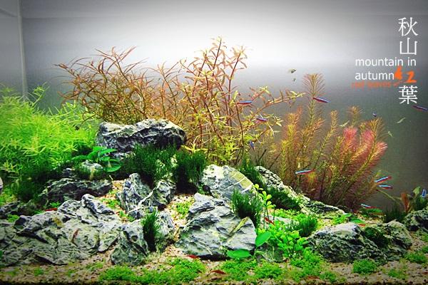 秋山。紅葉29