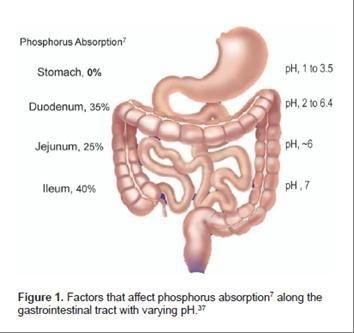 含磷食物與慢性腎衰竭相關性之探討1
