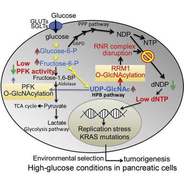 糖與胰臟癌.jpg