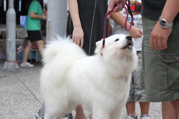 nEO_IMG_2009-09-13週日綠園道0026.jpg