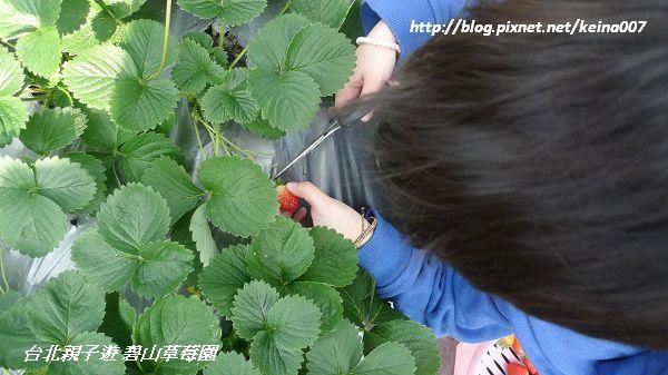 nEO_IMG_P1390932-1.jpg