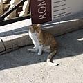 連國外的貓都很好命