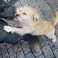 ....我就說法國的狗髒髒又醜醜的吧