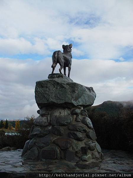Mackenzie dog-2.JPG