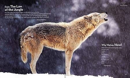 BOOK OF ANIMAL POETRY - PAGE 142+143.jpg