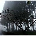 霧裡看花.jpg