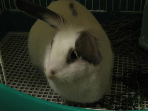 曉旻的兔兔