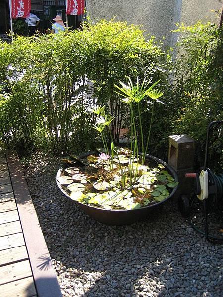 門口的小池子