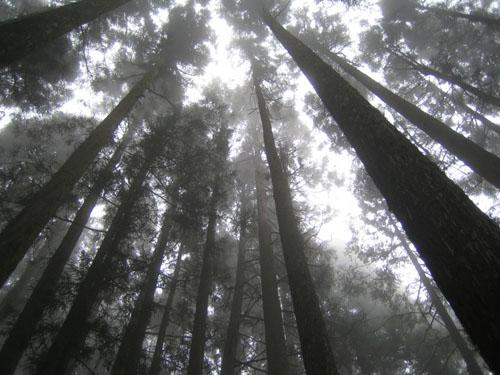001前往姊妹潭的樹林區