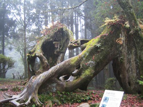 005名為同心的樹木