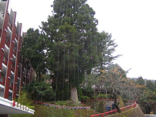 017看一下白天的聖誕樹