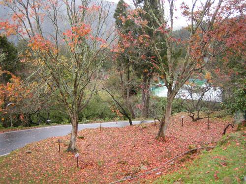 018賓館門口的秋紅樹