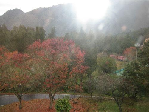 037霧霧的楓紅