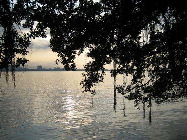夕陽與垂樹