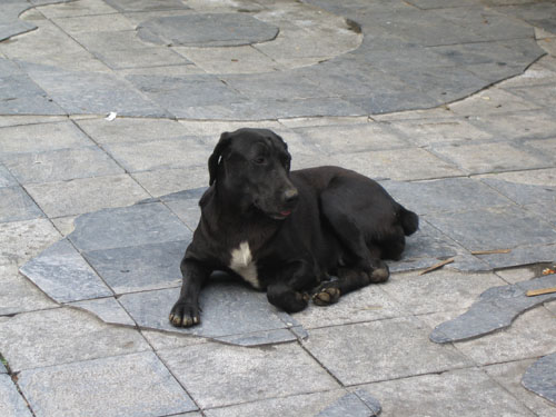 德化社區小黑狗
