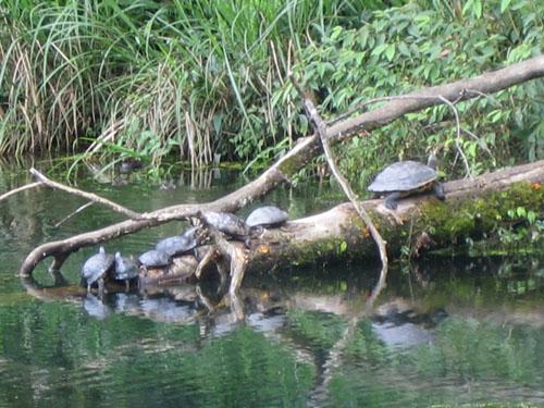 12_福山烏龜