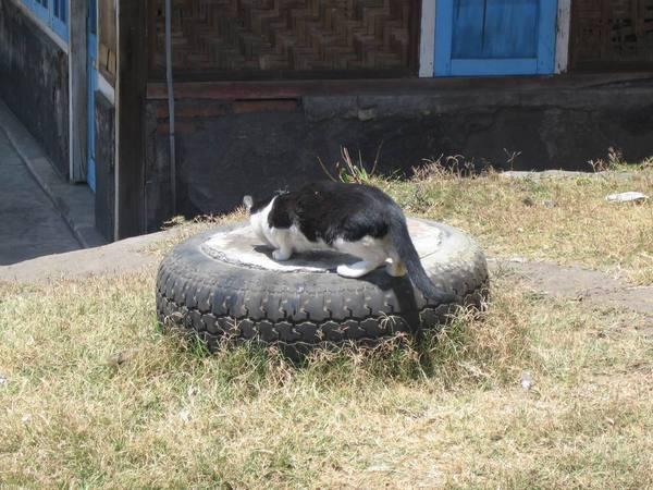 火山騎車處CAT01.JPG