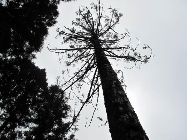 樹木2.jpg