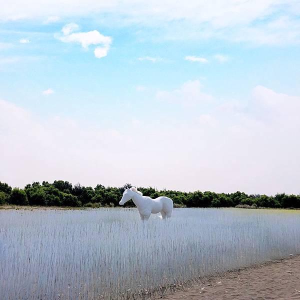 1553673627 1730223806 n - 台南最新夢幻打卡景點│2019漁光島藝術節│超夢幻海島新樂園!