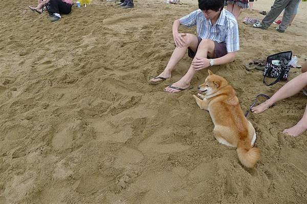 可愛的狗狗  後來被主人埋到沙子裡了也都沒亂動 超可愛的~