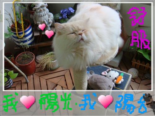 大大日記 416.jpg