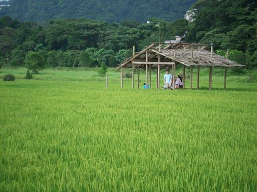 一片綠油油稻草中的涼亭~那這看起來粉有味道.JPG