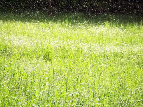雨後發亮的草~.JPG