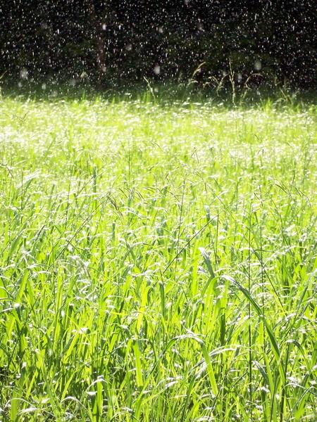 閃亮亮的草地.JPG