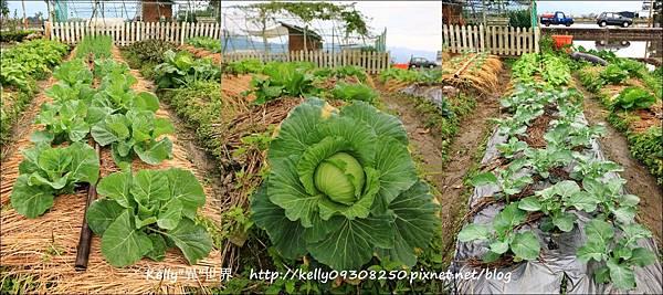菜園-1800.jpg