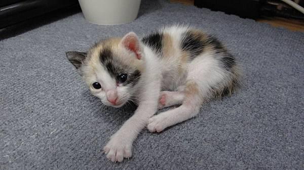 這應該是小貓出生一兩個月後的事了~