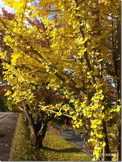 2013北海道10.23 113