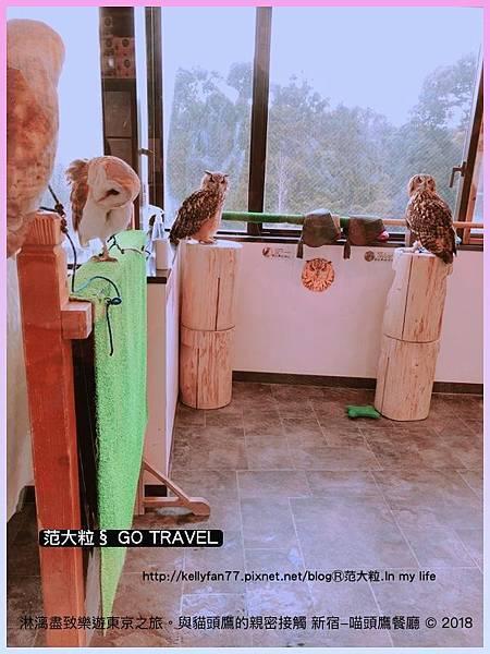 新宿-喵頭鷹餐廳03.jpg