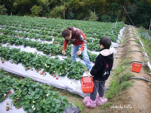 大湖草莓-07.jpg