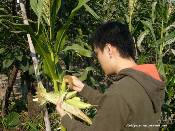 玉米的檢查.jpg